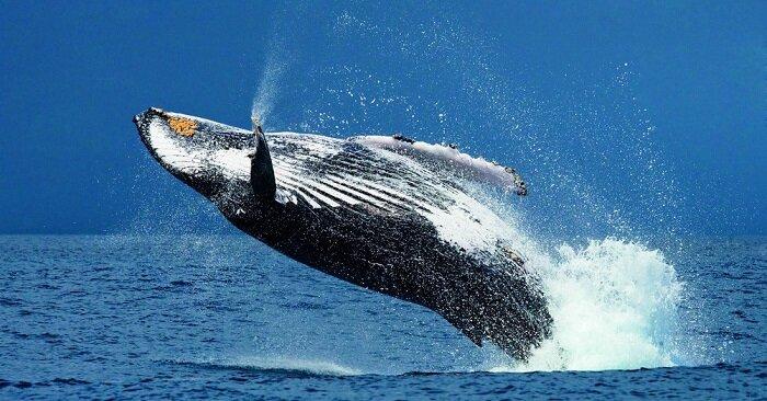 Сколько живет кит