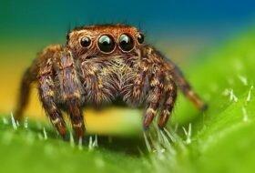 Сколько живут пауки?