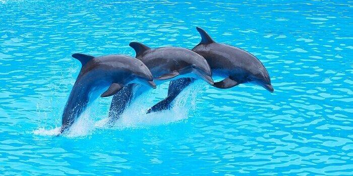 Сколько живут дельфины?